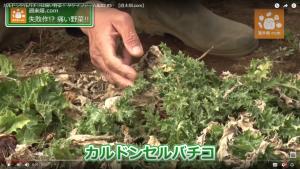 イタリアに生息する野生種の野菜