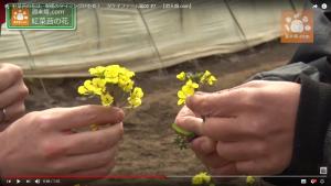 柴海さん(左)が持つ花は開ききっている