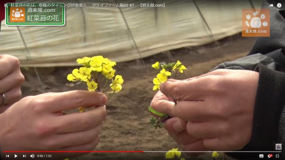 柴海さん(左)が持っているの花は開ききっている