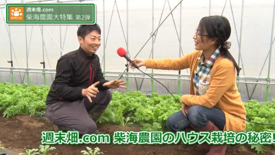 葉物野菜について説明する柴海さん