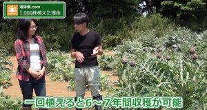 一回植えると6〜7回収穫可能