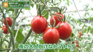 夜の大人向けのトマト…!?