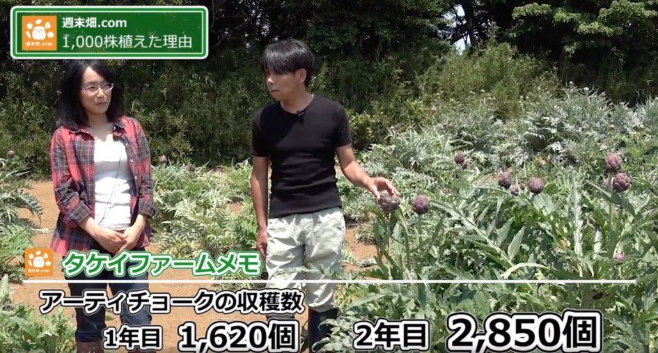 アーティチョークの収穫量