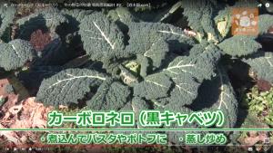 表面が縮れた細長い深い緑色の葉が特徴的