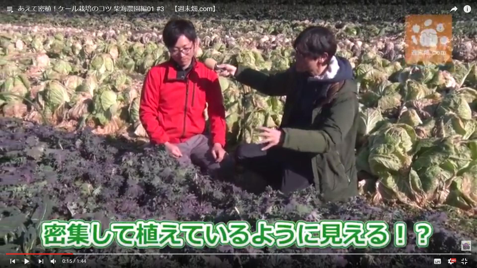 色々な野菜を植えることでリスク分散の効果がある