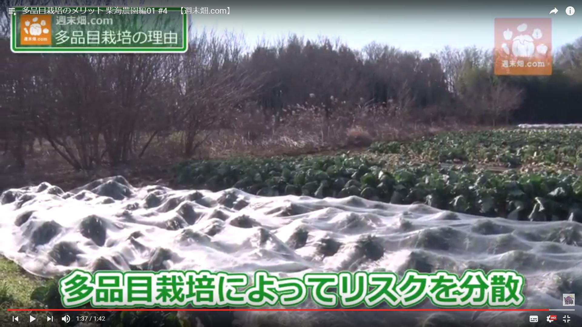 色々な野菜を植えている方がリスク分散になるという