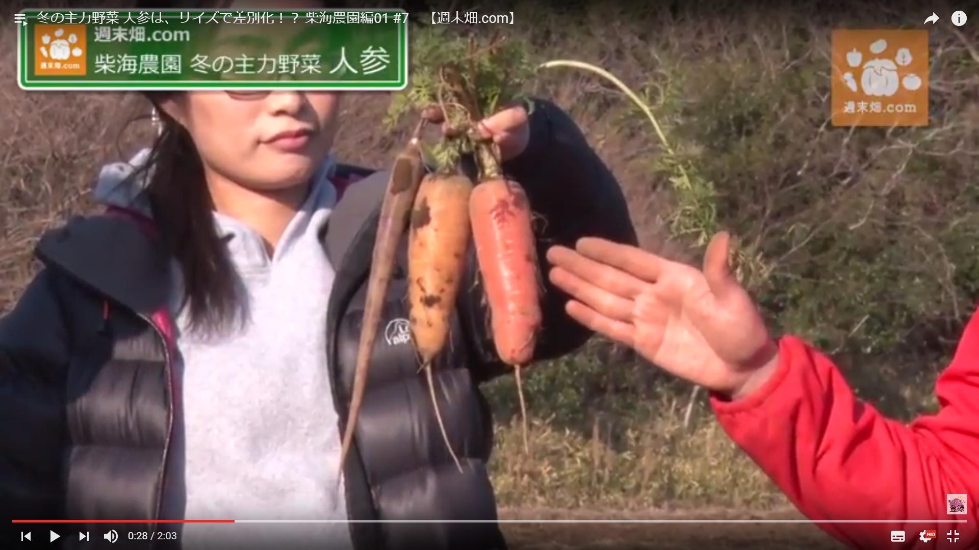 柴海農園で栽培するひとみ五寸人参と金美人参、紫人参(右から)