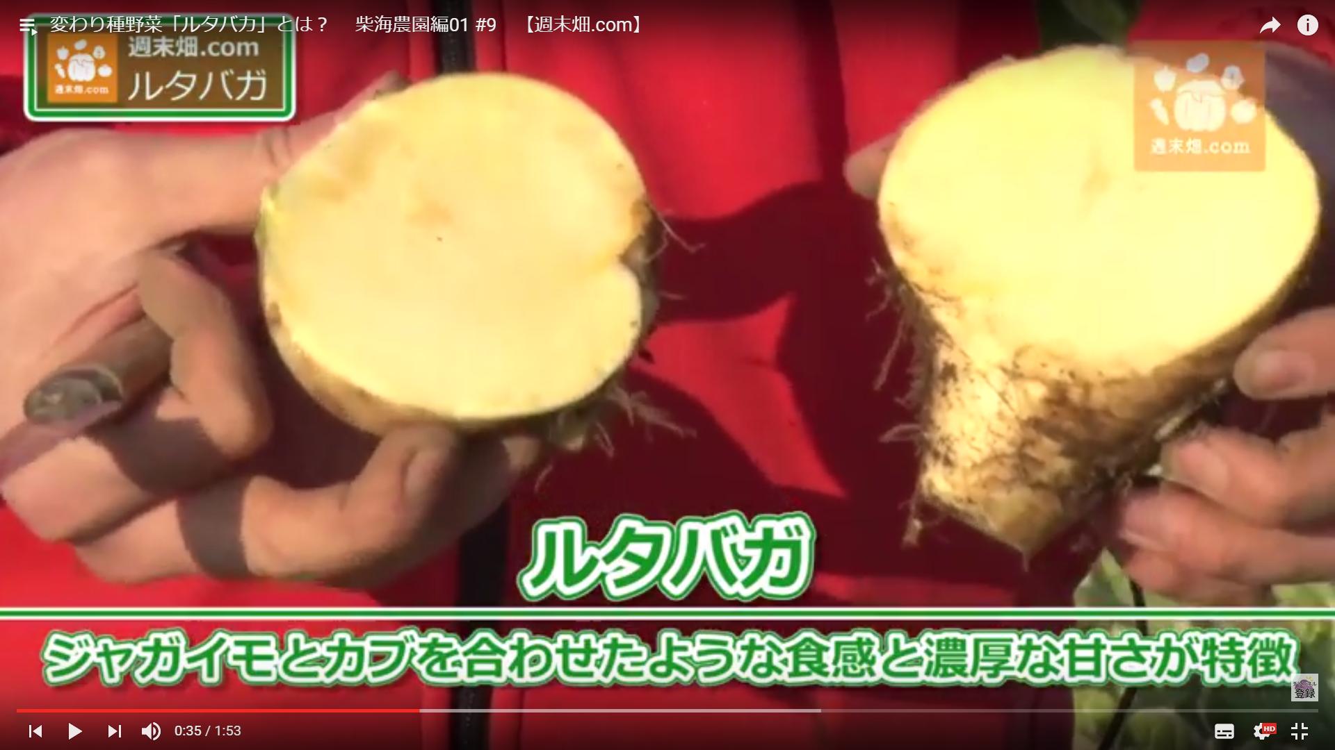 日本では珍しい不思議なカブ