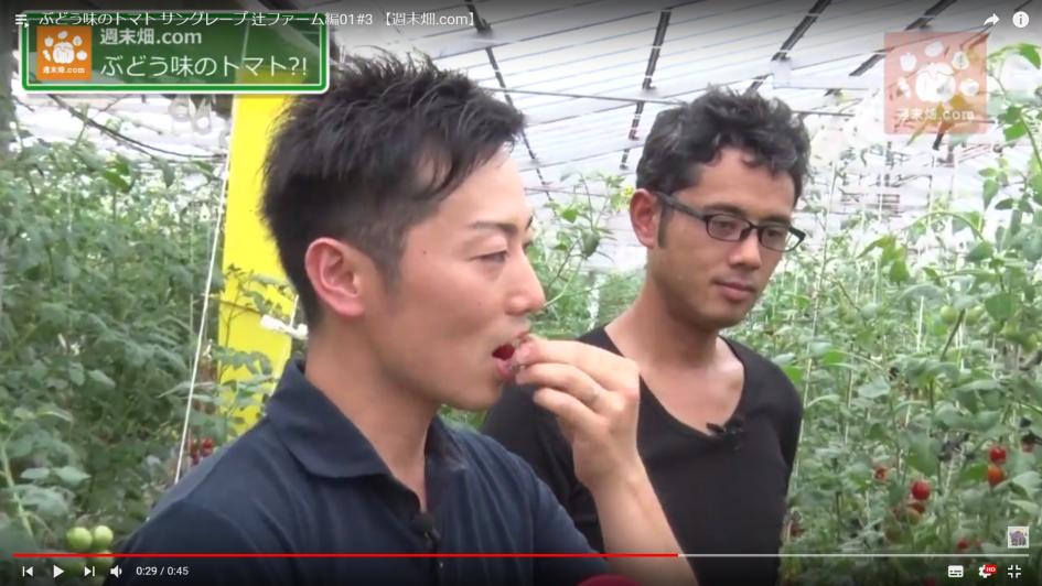 ブドウ味のトマトを試食