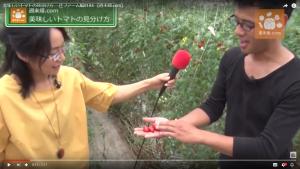 美味しいトマトは形から見分けられる