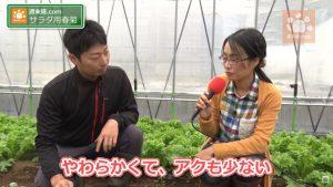 食べやすい春菊