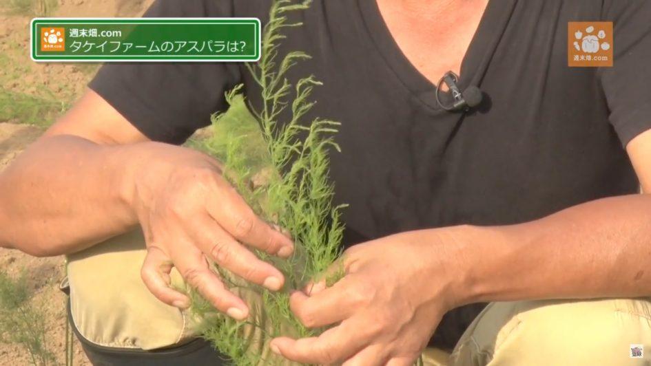 1年で収穫できるアスパラガス