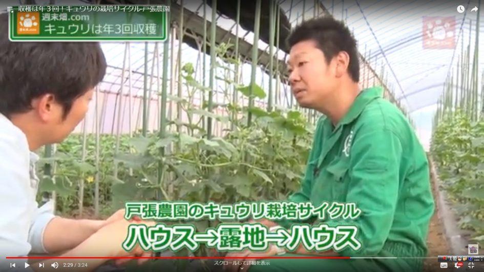 収穫は年3回!キュウリの栽培サイクル
