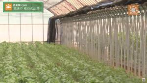 枝豆栽培は温度管理
