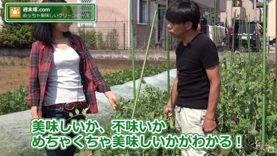 グリンピースを触る武井さん