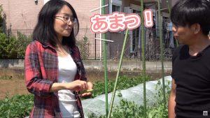 武井さんのグリンピースは糖度が高い
