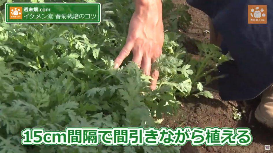 春菊栽培を伝授