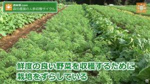 収穫時期をずらす野菜