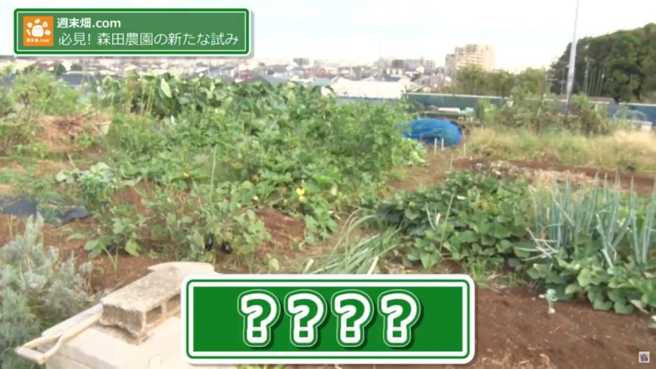 たくさんの野菜をつくる貸農園